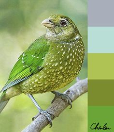 Green bird palette