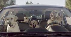 "LABtv Video: Subaru's ""If Dogs Could Drive"" Commercial Nails It 