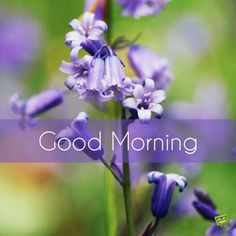 Good Morning picture with purple bell flowers. Good Morning Images Hd, Good Morning Picture, Good Morning Flowers, Good Morning Messages, Good Morning Greetings, Morning Pictures, Good Morning Wishes, Morning Pics, Happy Morning
