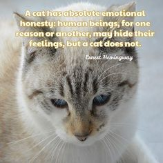 Kathryn R Blake (@kathrynrblake) • Instagram photos and videos I Love Cats, Cat Lady, Fur Babies, Truths, Cat Lovers, Relationship, Quote, Feelings, My Love