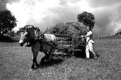 Nr. 34. Odd Oleivsgard med fôrlass, 1969. Utlånt av Odd Oleivsgard Black White Photos, Black And White, In 2015, Old Photos, Norway, Old Things, Horses, Animals, Inspiration