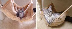 tilestwra.gr | 15 πριν και μετά από γατάκια που μεγάλωσαν και έγιναν γάτες!