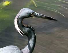 S-Curve Bird