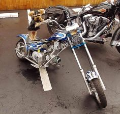 Tails & Tailpipes – Biketoberfest® Pet Photo Contest We are voting daily for our friend HARLEY THE BIKER DOG in this photo contest...Will you??  He does so much for everyone who asks....its our time to show appreciation~~~If you have seen him around town at events, fundraisers, and benefits you know he deserves this~