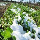 El huerto ecológico en Enero