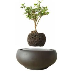 Yes, plant pots can be floating floating! Add magic to your living room, reception lounge, meeting room or office with these floating magnetic plant pots Potted Plants, Indoor Plants, Plant Pots, Decorative Items, Decorative Bowls, Floating Plants, Plants Are Friends, Monstera Deliciosa, Different Seasons