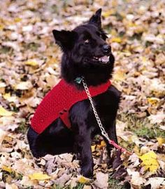 Free pattern for a dog sweater knitting