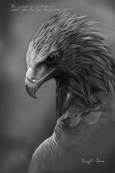 "Digital "" black & white "" eagle drawing ."