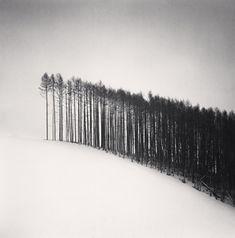 Forest Edge, Hokuto, Hokkaido, Japan, 2004 / michael kenna