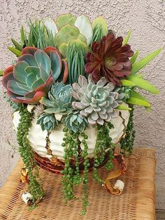 Beautiful succulent container - love the String Of Pearls trailing out. Nature Containers Vintage Garden Art. #containergardeningideassucculents