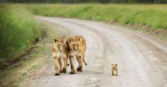 25 Momentos fofos em família protagonizados por animais