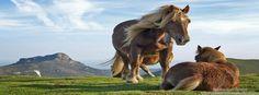 Horses timeline cover, animals timeline cover banner