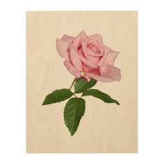 Pink Rose Flower with Dew Drops Wood Canvas