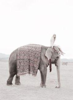 bucket list: ride an elephant