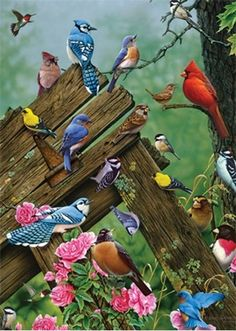 Birds on a Fence - Paint by Number Kit. by OurPaintAddictions Acrylic Paint Set, Acrylic Painting Canvas, Diy Painting, Painted Cups, Paint By Number Kits, Woodland Creatures, Wild Birds, Beautiful Birds, Blue Bird