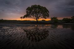 Tree of Life by Tom McQuarrie - Photo 128946781 - 500px