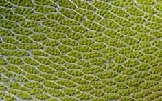 Bionic Leaf Makes Fuel from Sunlight, Water and Air | chemical research | Scoop.it