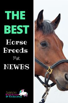 As a rider just getting started you may be wondering what the best horse breeds for beginners are. Maybe you want to lease a horse or someday buy a horse of your own, or maybe your just plain curious. Trail Riding Horses, Horse Riding Tips, Horse Tips, Horse Behavior, Horse Quotes, Horse Sayings, Buy A Horse, Morgan Horse, Horse Barns
