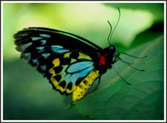beautiful exotic butterfly pics | Recent Photos The Commons Getty Collection Galleries World Map App ...
