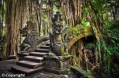 Ubud Monkey Forest, also known as the Sacred Monkey Forest of Padangtegal, is one of Ubud's most popular attractions; a natural forest sanctuary that is home to a horde of grey long-tailed macaques. The site is well preserved thanks to a community-based management program. The forest is