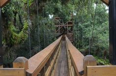 This Canopy Walkway At Myakka River State Park Takes You High Above The Florida Trees Florida Trees, Old Florida, Naples Florida, Tampa Florida, Bradenton Florida, Florida Beaches, Clearwater Florida, Miami Wallpaper, Myakka River State Park