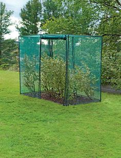 Pvc And Netting To Cover Blueberry Bush We Have One And Last Year The Birds Got All The
