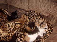 Callie and Sammy