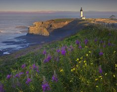 Summer Morning - Yaquina Head Lighthouse, Oregon Coast, Oregon by Kevin McNeal
