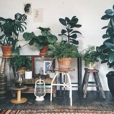 Looking for easy houseplants that don't need a lot of sunlight? Here are 11 amazing indoor plants that are hard to kill and easy to maintain. House Plants Decor, Plant Decor, Low Maintenance Indoor Plants, Gardening For Dummies, Interior Design Programs, Gravity Home, Bedroom Plants, Houseplants, Decoration
