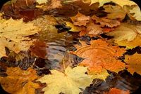 Fall autumn email backgrounds. Cool Fall Wish For You