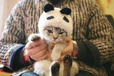 dressing up kitty