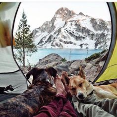 Puppy snuggles with a mountain view, not too shabby   @briannamadia #backcountrypaws