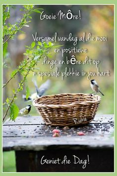 Goeie More, Good Morning Wishes, Prayer Quotes, Prayers, Outdoor, Afrikaans, Day, Pictures, Night