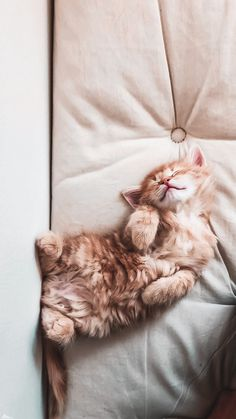 Wallpaper Gatos, Cute Cat Wallpaper, Cute Cats And Kittens, Baby Cats, Kittens Cutest, Cute Baby Animals, Animals And Pets, Funny Animals, Cute Cat Memes