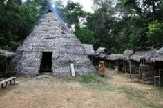 Educational safari in the Amazon rainforest, staying in premier ...