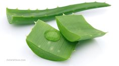 Cancer-fighting abilities just one of many aloe vera health benefits