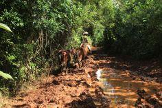 #cuba #vinales #mogote #boue Cuba Vinales, Country Roads, Havana, Places