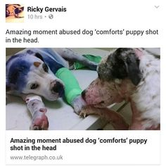 We LOVE when celebrities share animals stories because they can reach so many more people than rescues can! Thank you Ricky Gervais for being their voice & sharing Simon & Sammie!!!!! #rescuedogsrocknyc #nyc #adoptdontshop #nycdogswag #thedodo #dog #newyorkcity #bmupc #newyork #manhattan #spreadtherumer #ny #puppy #adopt #rescue #brooklyn #queens #bronx #longisland #dogsofnyc #rdrnyc #rickygervais #fosterdogsnyc #houndsbazaar #nycdogs #lacyandpaws #statenisland #dontshopadopt by…