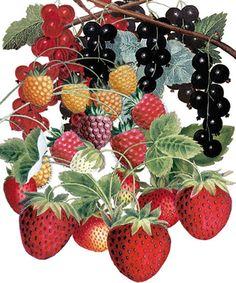Summer Fruits - Natural History Museum greeting card