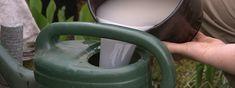 Gießkanne mit einer Mischung aus Hefe, Wasser und Zucker als biologischer Beschleuniger für den Kompost