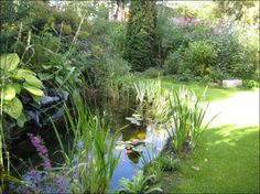 Extending Your Garden pond into your lawn to bring in more natural plant life.