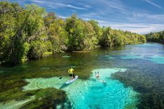 Photo by @CarltonWard // The Rainbow River flows five miles from Rainbow River State park to its confluence with the Withlacoochee River on Florida's Gulf coast. Freshwater springs along its course deliver clear water from the underground aquifer. Northwest Florida has the highest concentration of freshwater springs in the world. #naturecoast @fl_wildcorridor #FloridaWild #keepflwild by natgeotravel