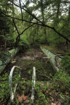 Abandoned lap pool in forest