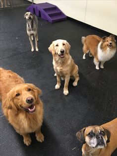Is it treat time? #TossIt #DogGames #DoggieDaycare #DogFriends
