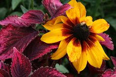 """flowers pictures 