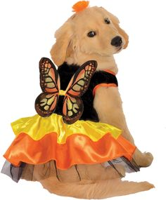PET COSTUME BUTTERFLY LARGE - Freaky Findz