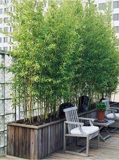 bambus garten im hause wachsen dachterrasse dekoration