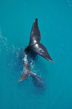 Whale flukes...such amazing beauty.