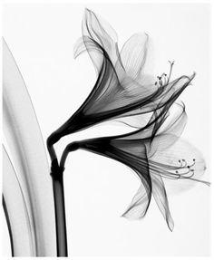 © Steven Meyers just stunning.