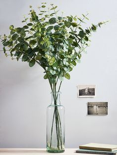 Displayed in our Tall Recycled Glass Vase, our set of six soft green eucalyptus stems look so realistic you'll find it hard to believe they're not. These six faux stems add a fresh botanical feel to your home all year around without the hassle of buying new flowers.